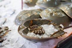 Limulo al mercato dei frutti di mare Fotografia Stock Libera da Diritti