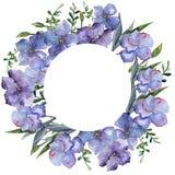 Lin coloré Fleur botanique florale Place d'ornement de frontière de vue Image stock