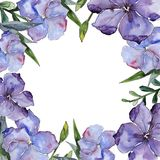 Lin coloré Fleur botanique florale Place d'ornement de frontière de vue Photos stock