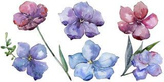 Lin coloré Fleur botanique florale Wildflower sauvage de feuille de ressort d'isolement Images stock