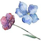 Lin coloré Fleur botanique florale Wildflower sauvage de feuille de ressort d'isolement Photo stock