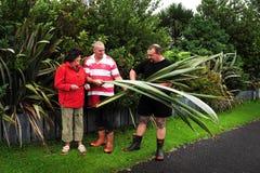 Lin i Nya Zeeland Royaltyfria Bilder