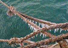 lina na łodzi Zdjęcie Royalty Free