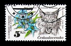 Lince euro-asiático do lince do lince, proteção do asclepiadea de Willow Gentian Gentiana do serie da natureza, cerca de 1983 Imagens de Stock Royalty Free