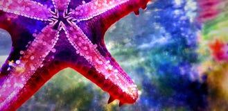 Linckii vermelho de Protoreaster da estrela de mar do botão imagem de stock royalty free