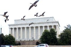 Lincoln memorial with Canadian geese flying by. Great morning to go to photography on a winter day in Washington DC stock photos