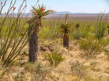 Tularosa Basin in Southern New Mexico royalty free stock image