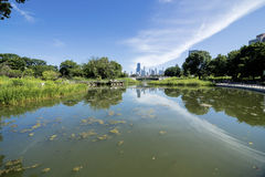 Lincoln Park Zoo i sommar Fotografering för Bildbyråer
