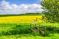 Lincolnshire com ponte e trajeto através da colheita imagens de stock