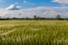 Lincolnshire wolds Royalty Free Stock Image