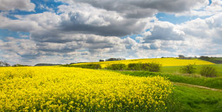 Lincolnshire wolds with oil seed rape Stock Photos