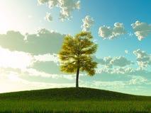 Lindeboom op een weide Stock Foto