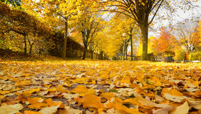 Lindegasse im Herbst Stockbilder