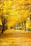 Lindegasse im Herbst Lizenzfreies Stockbild