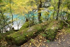Lindeman湖远足在一个大风天 免版税库存图片