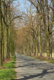 Linden alley Royalty Free Stock Photography