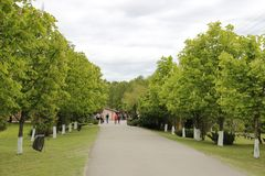 Linden alley in the open-air Museum Dudutki royalty free stock image