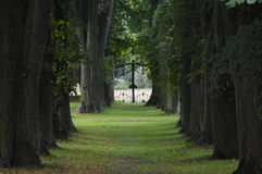Linden Alley in the Palace Garden Stock Image