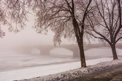 Linden alley on winter foggy morning. Longest in Europe linden alley on winter foggy and frosty morning. Mysterious scenery near the Masaryk bridge in Uzhgorod Stock Image