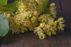 Linden blossom with green leaf royalty free stock image