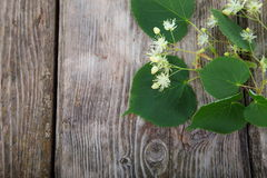Linden blossoms Royalty Free Stock Photography