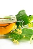 Linden flower tea Royalty Free Stock Photos