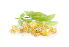 Linden flowers Royalty Free Stock Photos