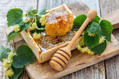 Linden flowers and honey in the comb. Stock Images