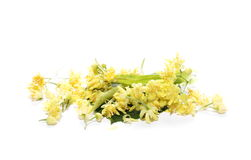 Linden flowers isolated on white Royalty Free Stock Photo