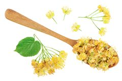 Linden flowers with leaf in wooden spoon isolated on white background. Top view. Flat lay. Linden flowers with leaf in wooden spoon isolated on white background stock images