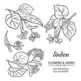 Linden vector set. Linden flowers and leaves vector set on white background Stock Photos