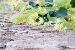 Linden flowers lie on the old wooden planks. Copy space stock photo