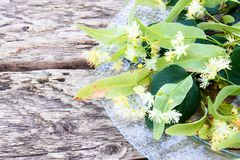 Linden flowers lying on a bowl on old wooden boards. Copy space stock photos