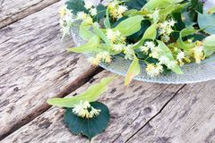 Linden flowers lying on a bowl on old wooden boards. Copy space stock photography
