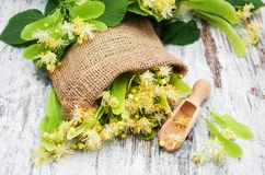 Linden flowers on the table. Linden flowers on a old wooden background Stock Photos