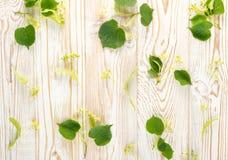 Linden Flowers Pattern foto de stock royalty free