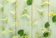 Linden Flowers Pattern image stock