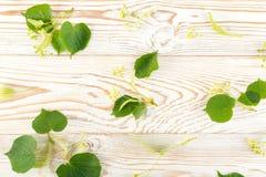 Linden Flowers Pattern fotografia de stock royalty free