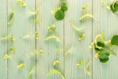 Linden Flowers Pattern fotos de stock