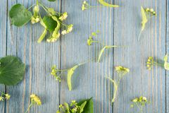 Linden Flowers Pattern photo stock