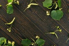Linden Flowers Pattern imagem de stock