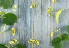 Linden Flowers Pattern imagem de stock royalty free