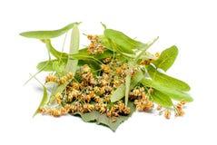 Linden flowers on white alternative medicine concept royalty free stock photo