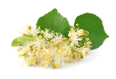 Linden flowers Royalty Free Stock Photos