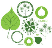 Linden. Isolated objects on white background. Vector illustration (EPS 10 Royalty Free Stock Image