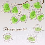Linden leaf green style with place for your text Stock Images