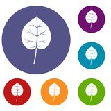 Linden leaf icons set. In flat circle red, blue and green color for web Stock Illustration