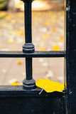 Linden leaf on an iron old door Royalty Free Stock Photo