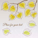 Linden leaf yellow style with place for your text Royalty Free Stock Image