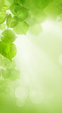 Linden Leaves on Abstract Summer Wallpaper Background Stock Image